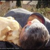Dog… me d'amour