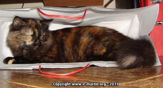 110201-Cat2