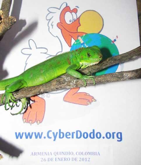 Kyllian et CyberDodo s'engagent pour défendre les Droits de l'Enfant et la Biodiversité