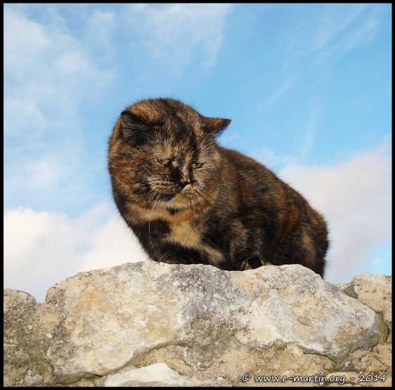 141214-Cat