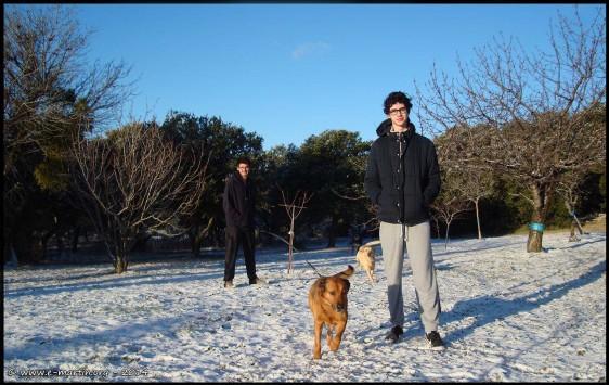 141229-Mallo-Max-Dogs